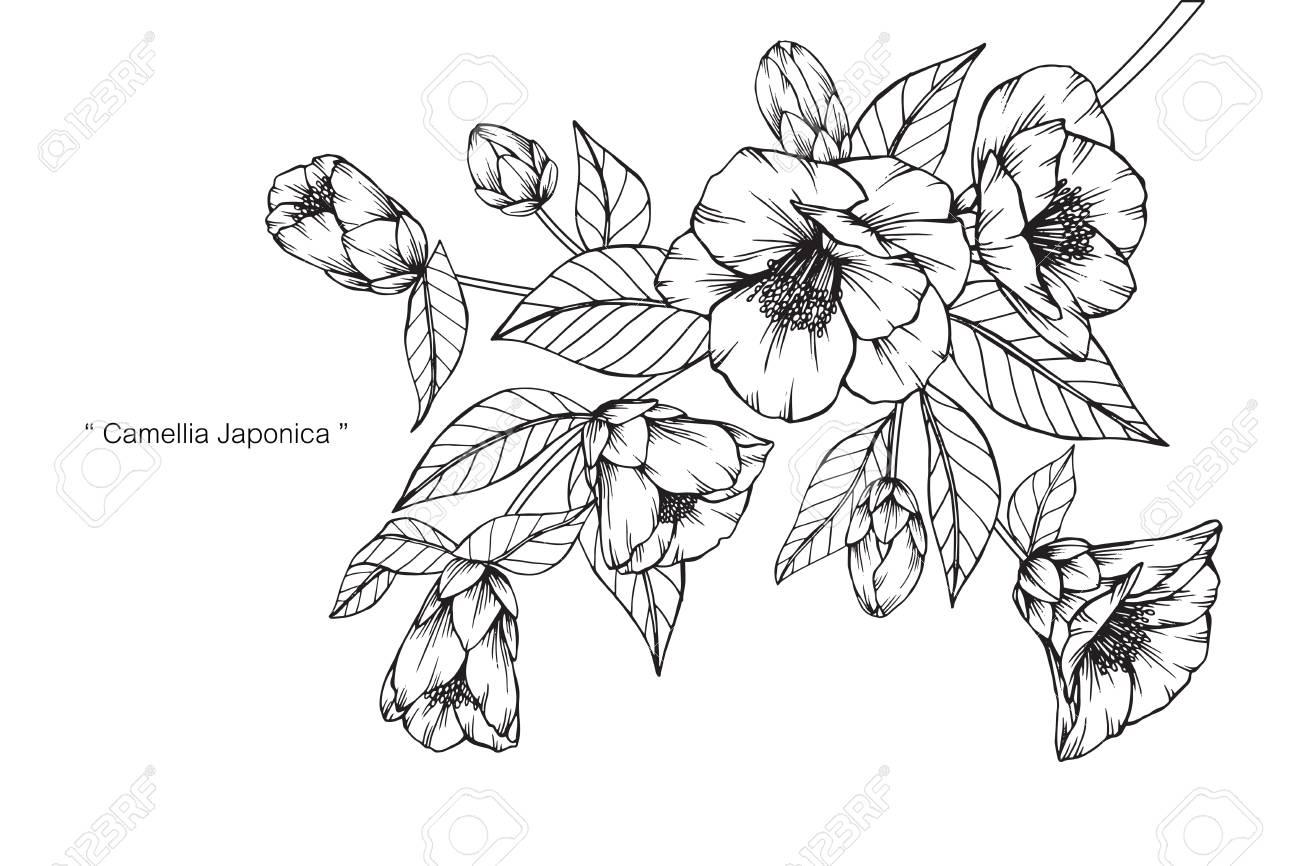 椿日本稲の花図面と黒と白の線画でスケッチのイラスト素材ベクタ