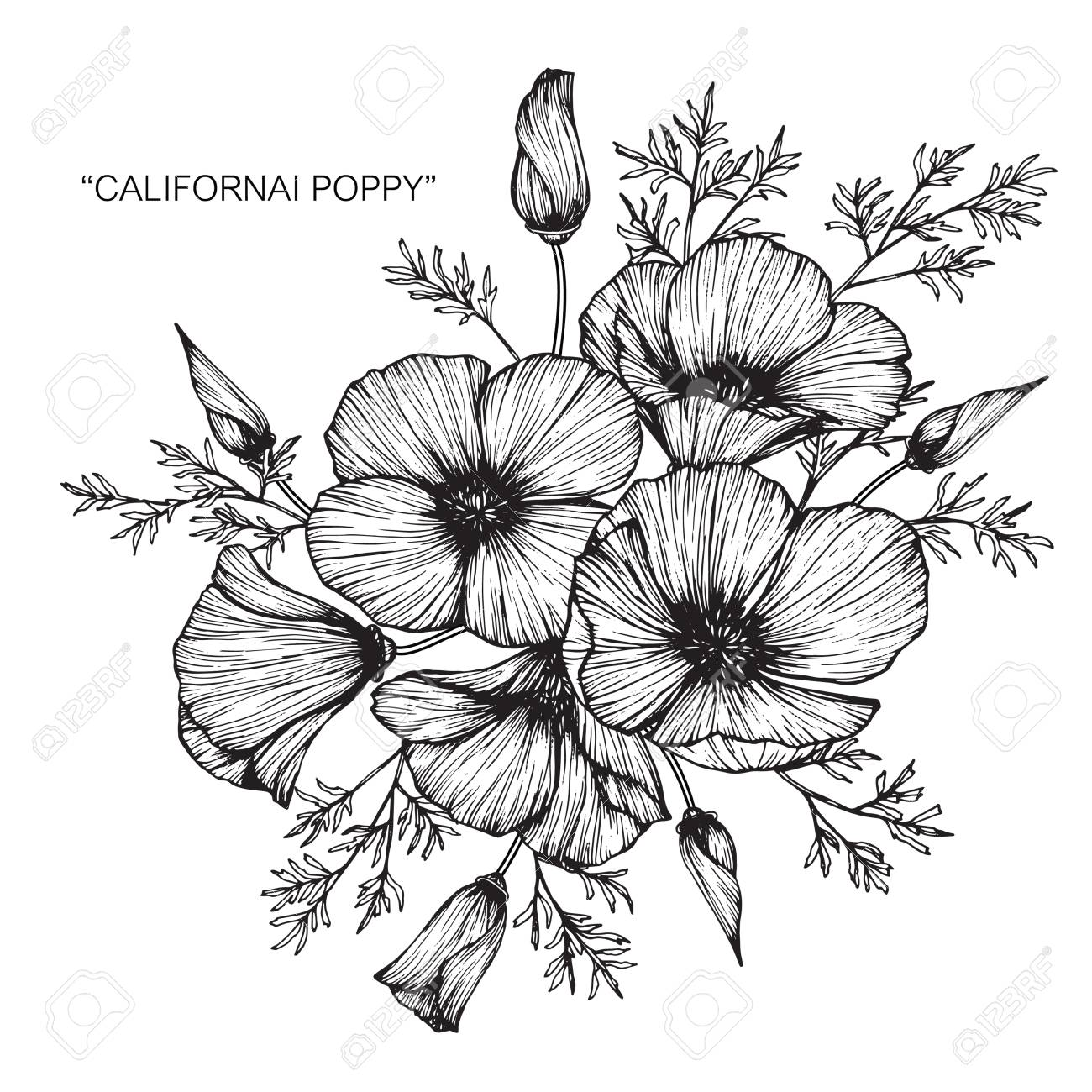 California poppy flower drawing royalty free cliparts vectors and california poppy flower drawing stock vector 88417575 mightylinksfo