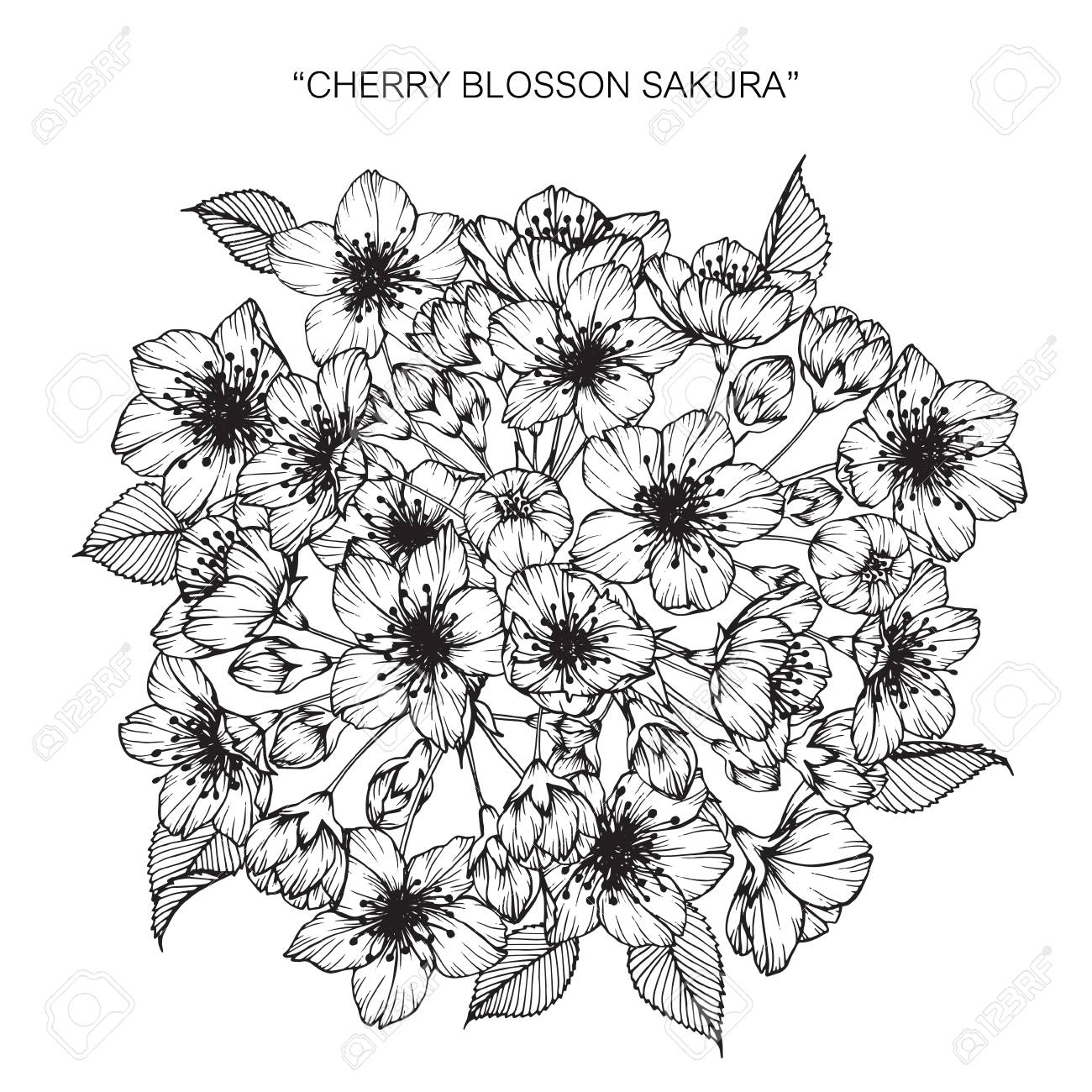 Bouquet of cherry blossom flowers drawing royalty free cliparts bouquet of cherry blossom flowers drawing stock vector 88414512 izmirmasajfo