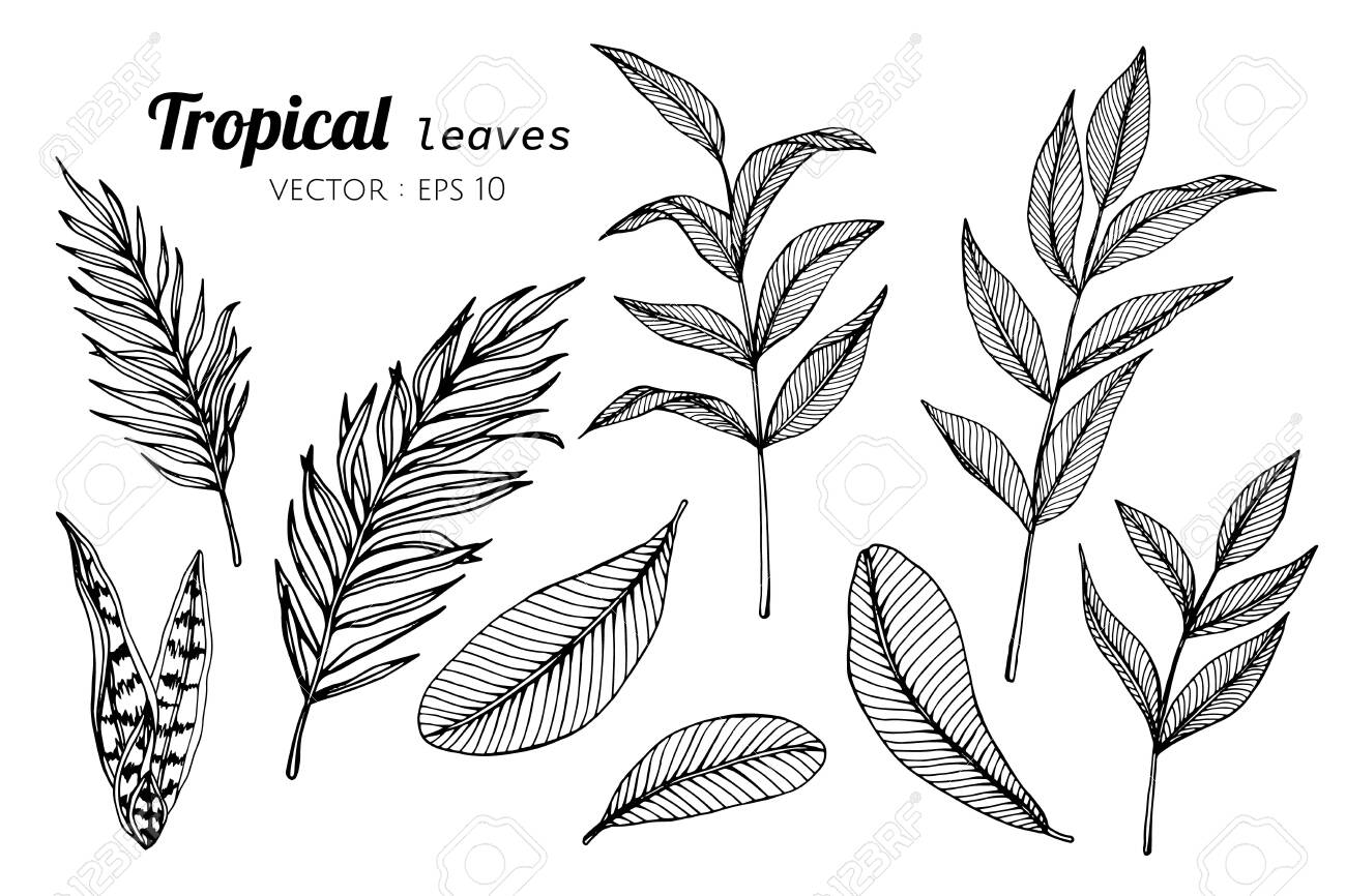 Collection Set Of Tropical Leaves Drawing Illustration For Pattern Royalty Free Cliparts Vectors And Stock Illustration Image 124448268