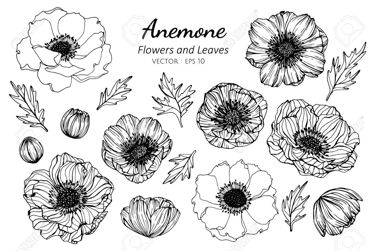 Collection set of anemone flower and leaves drawing illustration. for pattern, logo, template, banner, posters, invitation and greeting card design. - 124448283