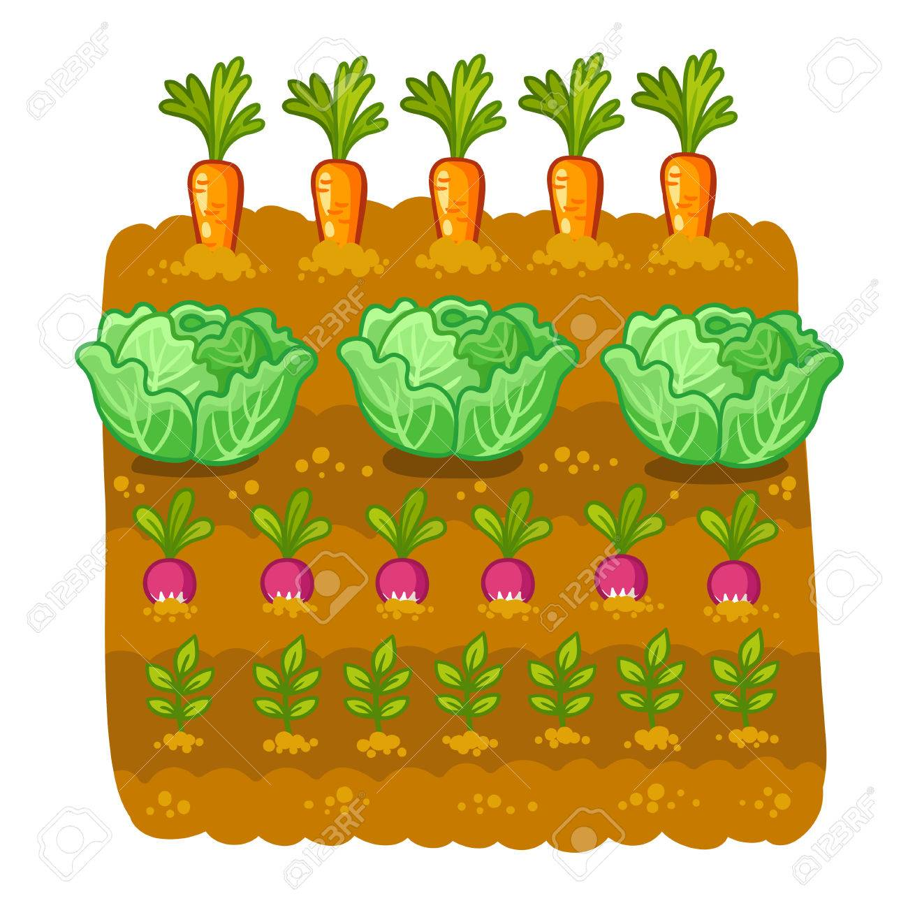 vegetable garden vector illustration with cabbage and radish rh 123rf com vegetable garden clipart free free vegetable garden clip art
