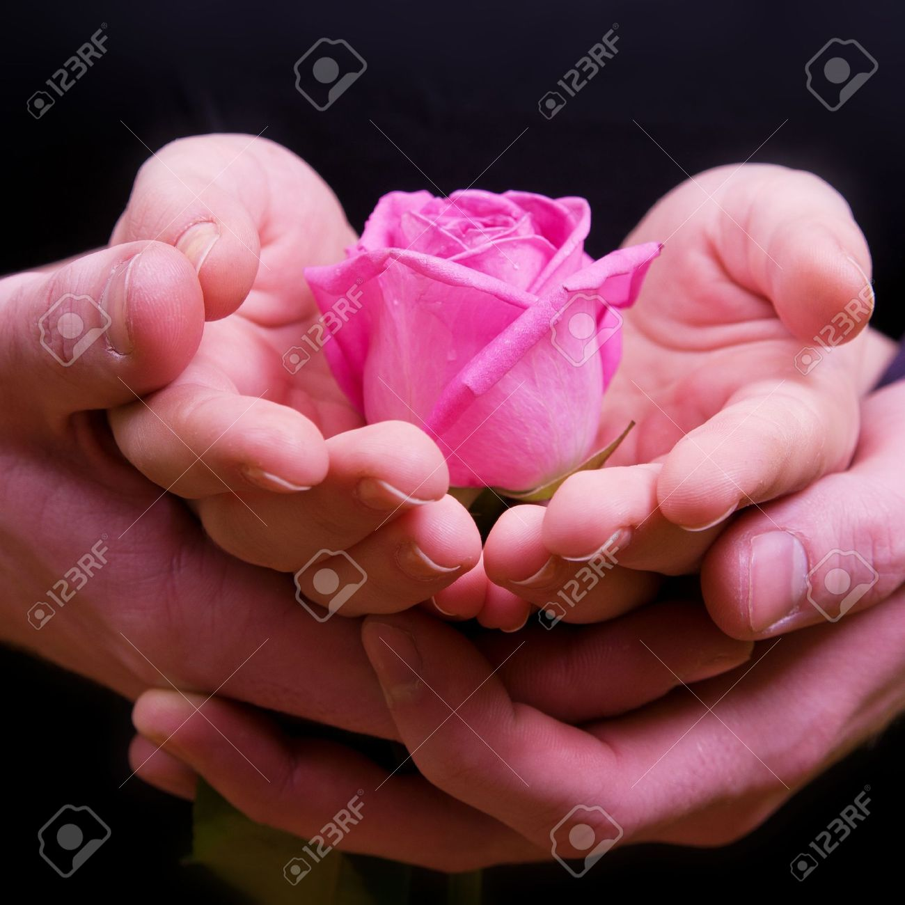 Boys and girls hands with pink rose flower stock photo picture boys and girls hands with pink rose flower stock photo 11095189 mightylinksfo