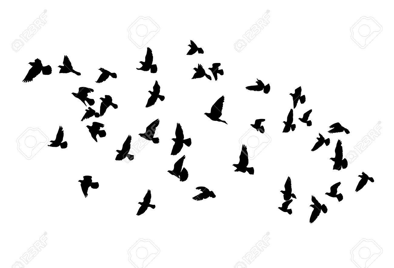 飛ぶ鳥、孤立した黒のアウトラインのベクター シルエット