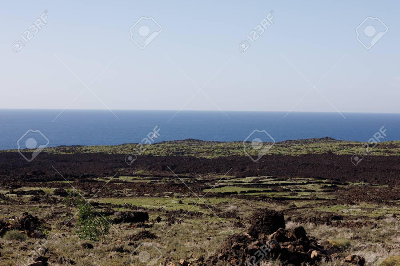 Volcanic, but green landscape on Lanzarote. - 81930390