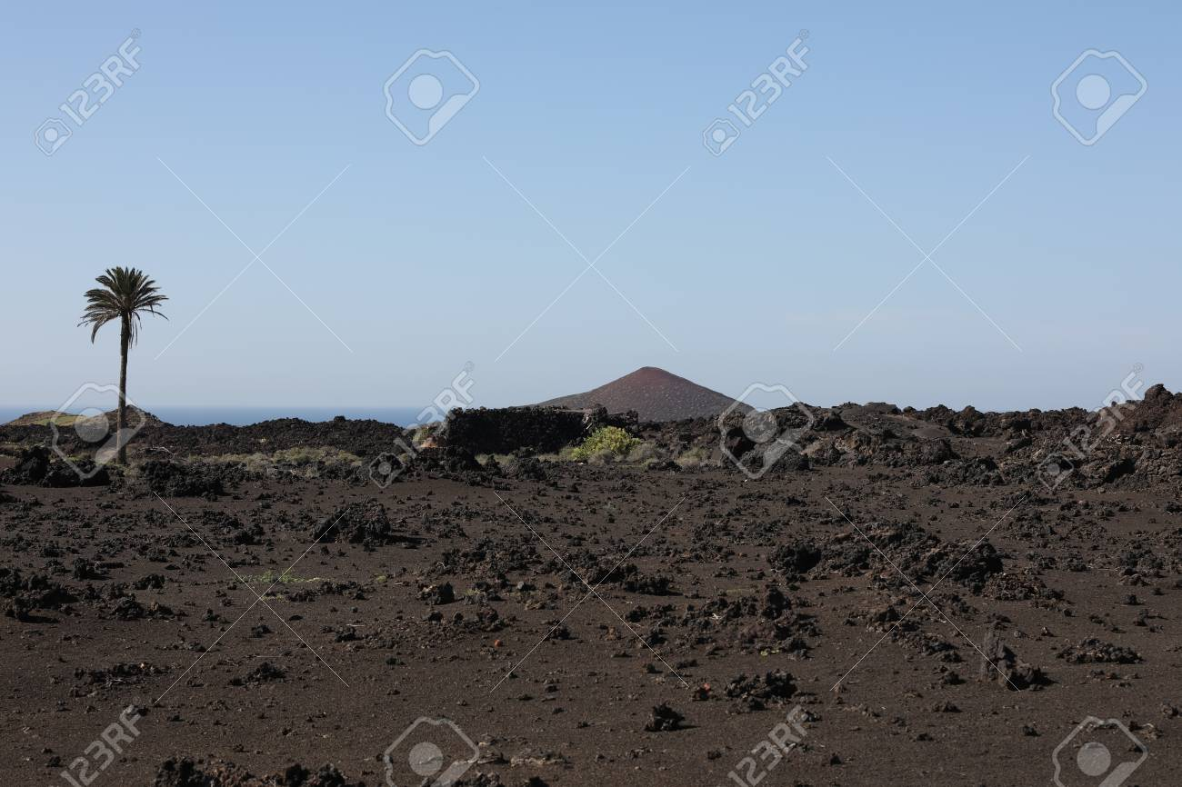 Volcanic, but green landscape on Lanzarote. - 81404451