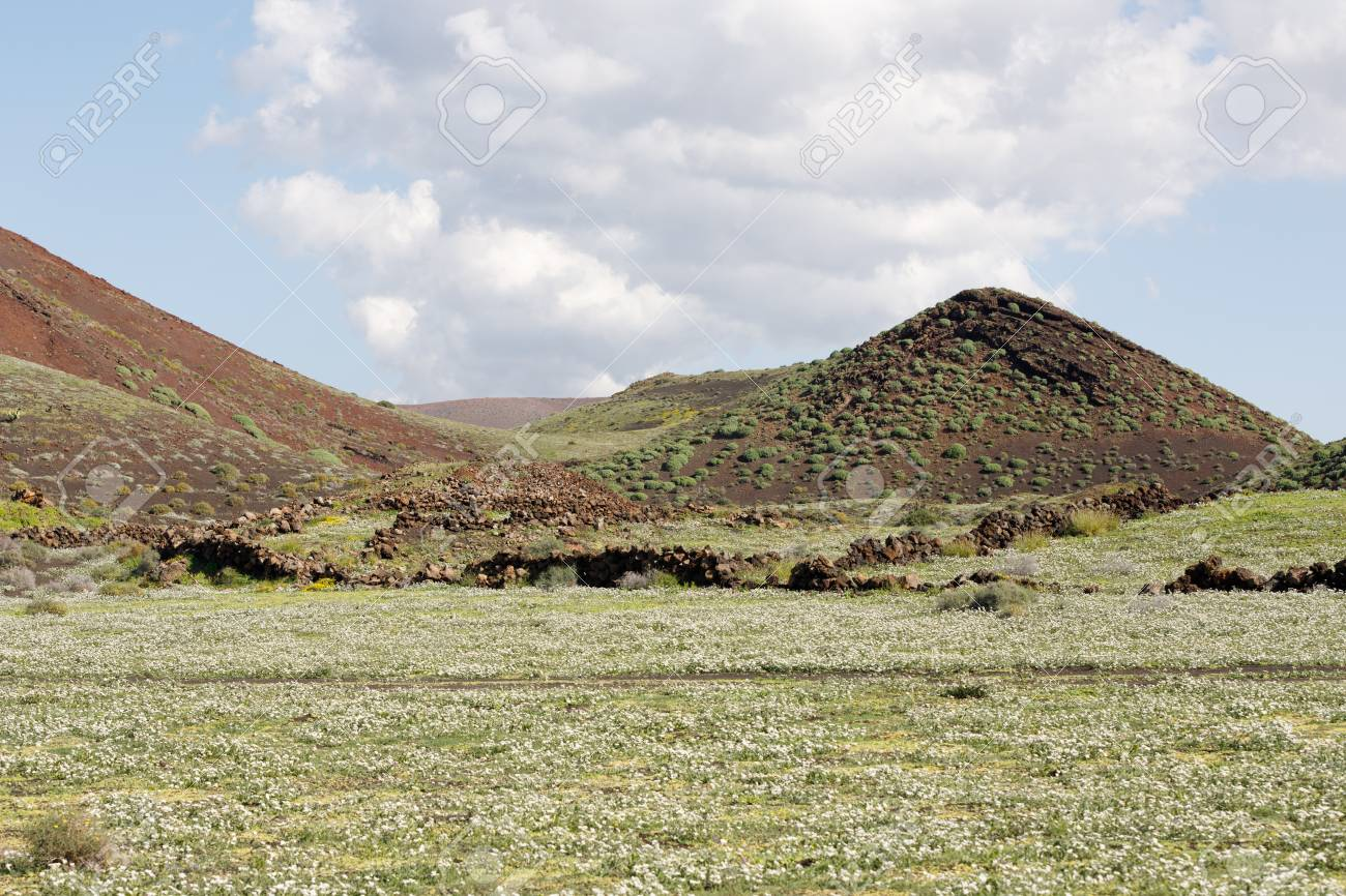 Volcanic, but green landscape on Lanzarote. - 81421724