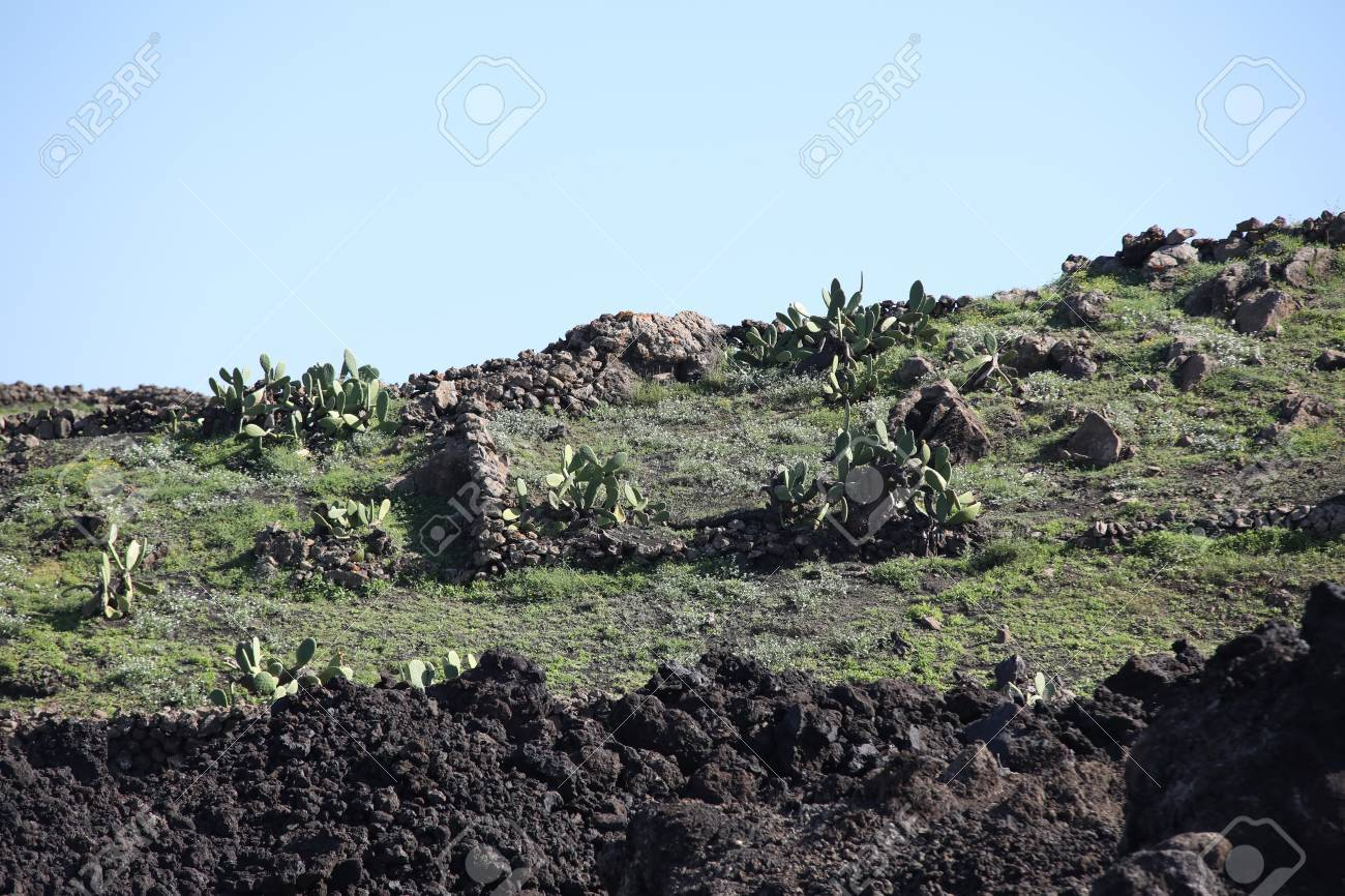 Volcanic, but green landscape on Lanzarote. - 81259917