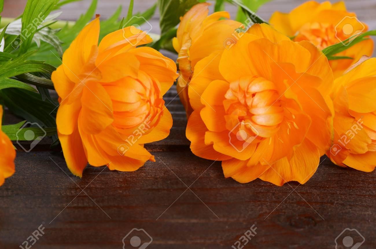 Fiori Arancioni.Immagini Stock Bei Fiori Arancioni Su Una Priorita Bassa Di
