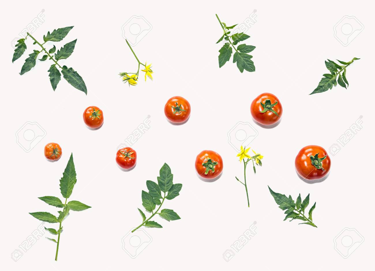 Template For Your Design. Composition Of Tomatos And Leaves ...