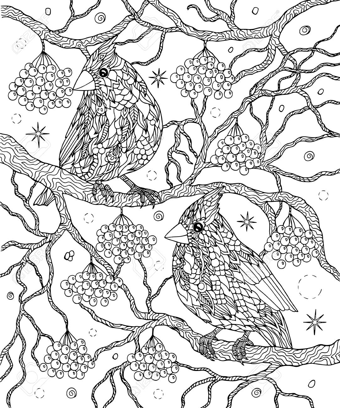 Birds and berries coloring page. Northern cardinals vector illus
