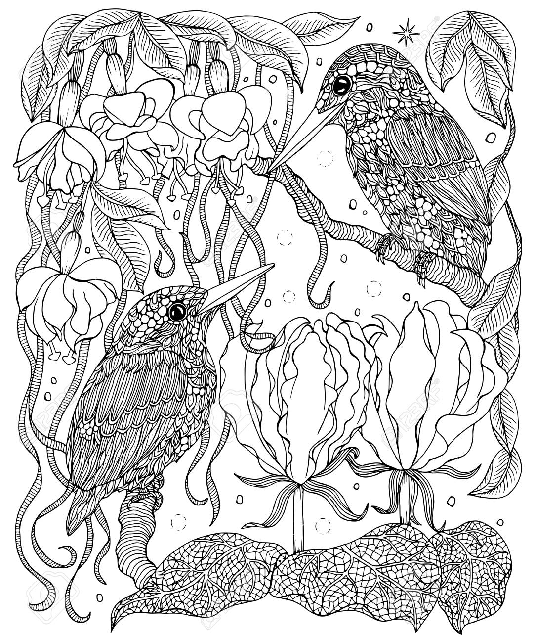 Birds And Flowers Coloring Page Kingfishers Vector Illustration Royalty Free Cliparts Vectors And Stock Illustration Image 90954208