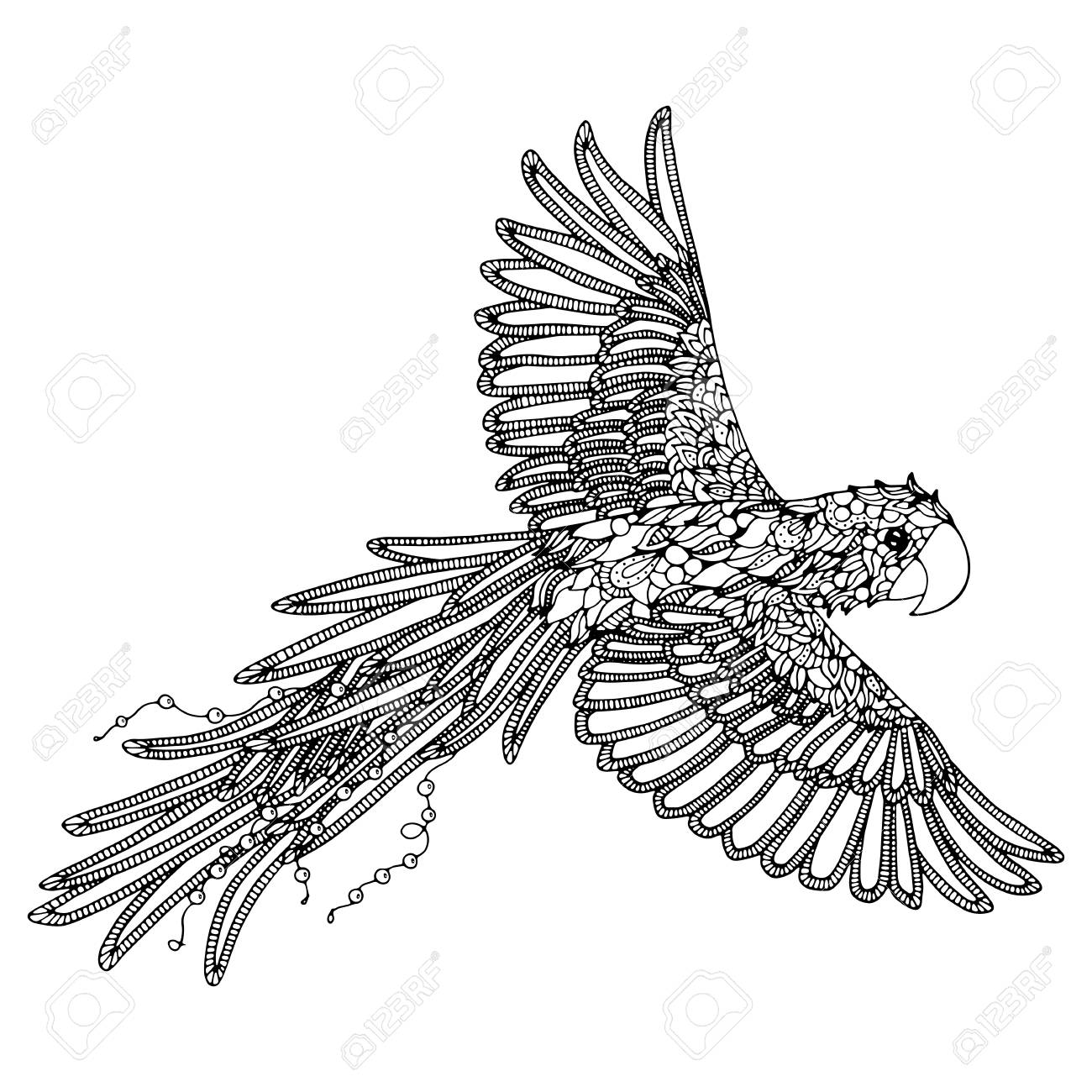 Parrot Coloring Page Scarlet Macaw Royalty Free Cliparts Vectors