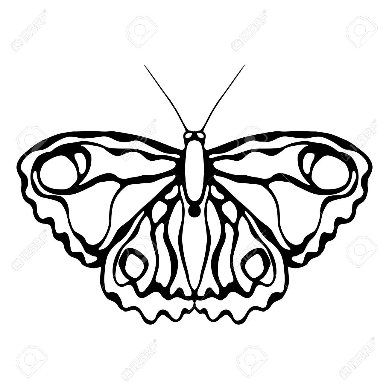 Mariposas Aisladas Sobre Fondo Blanco Diseño De Mariposa Objetos Para Colorear