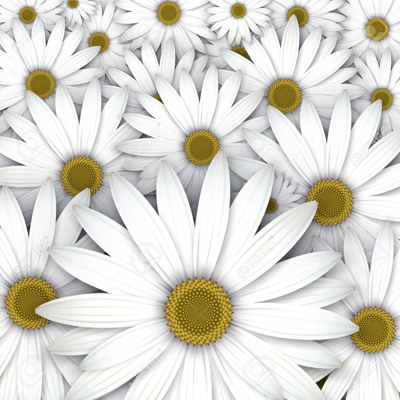 White daisy flowers field background. Stock Vector - 18167164