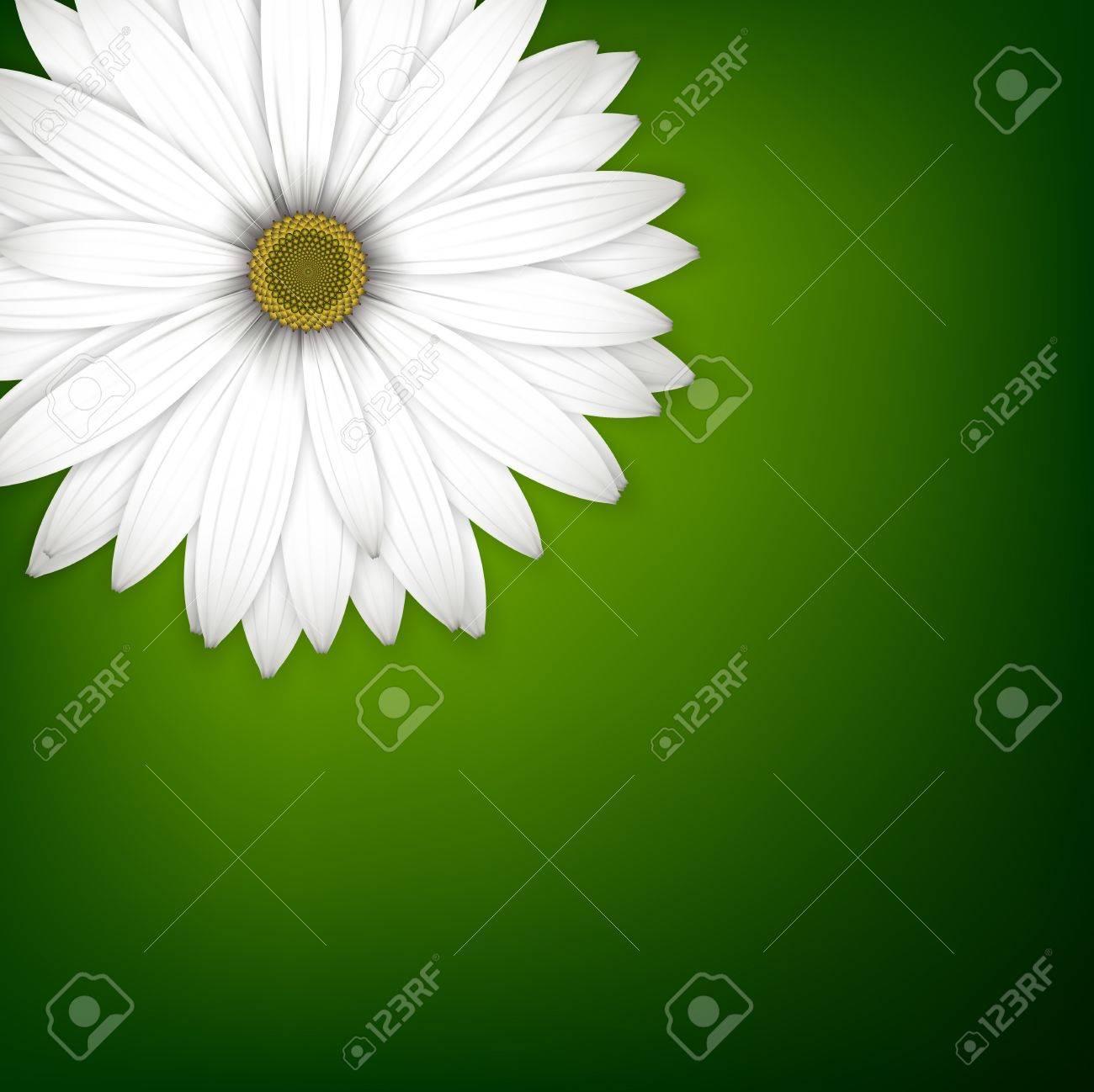 White daisy flower background. Detailed vector illustration. Eps10. Stock Vector - 18410960