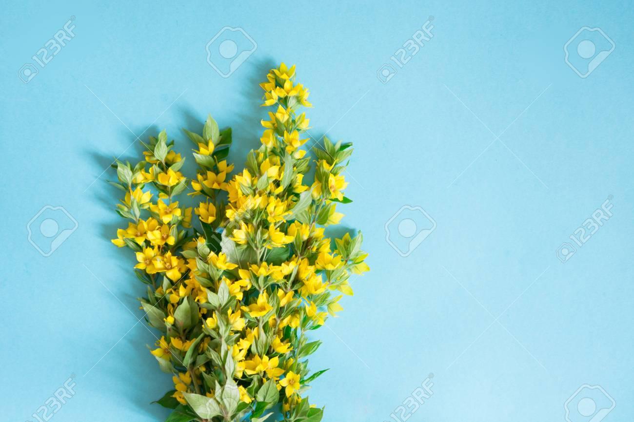 Festive Yellow Flower Arrangement Of Loosestrife Lysimachia Stock