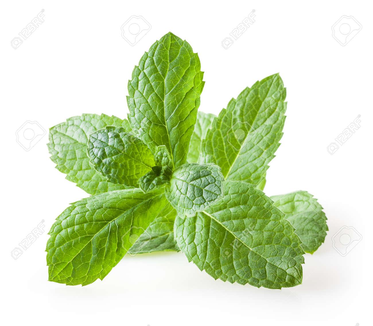 Fresh melissa leaves isolated on white background - 128285123