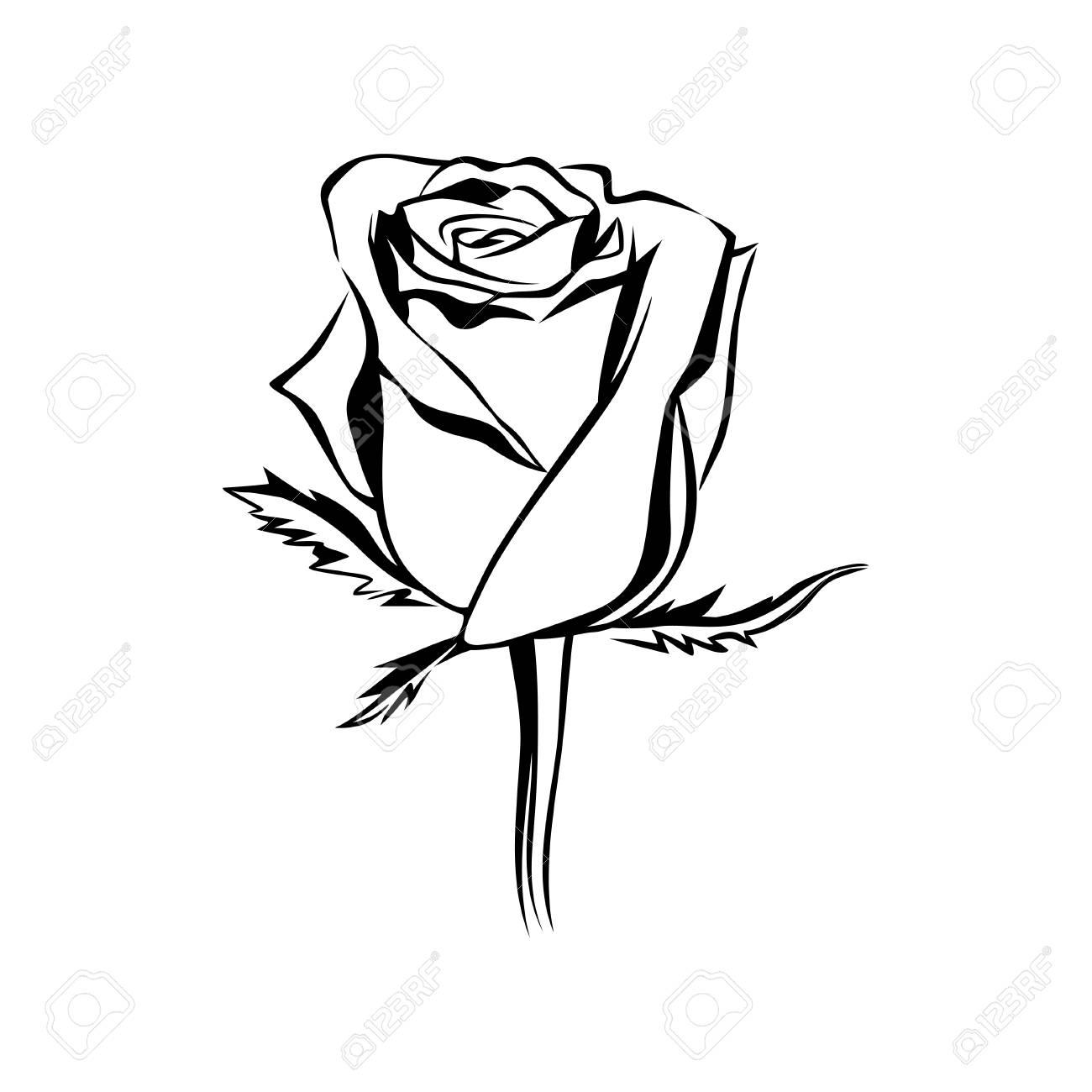 Vector Rose Bud Outline Silhouette Logo Tattoo Or Emblem Of