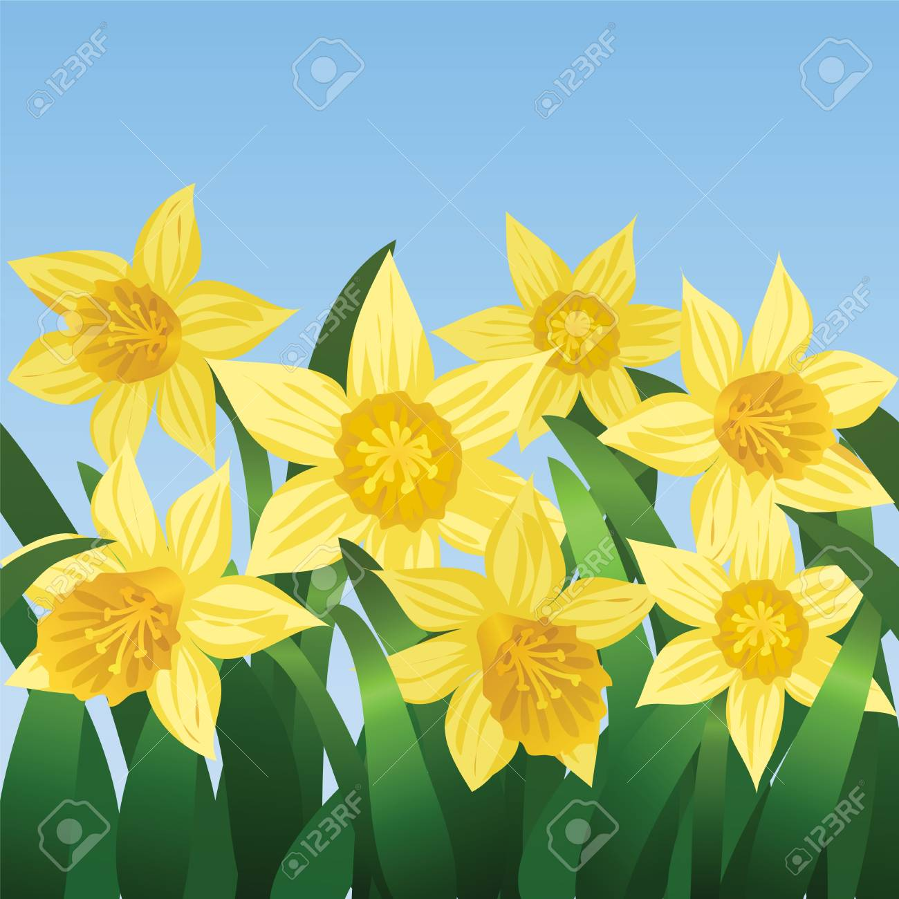 Blue sky and blooming daffodils Stock Vector - 16954358