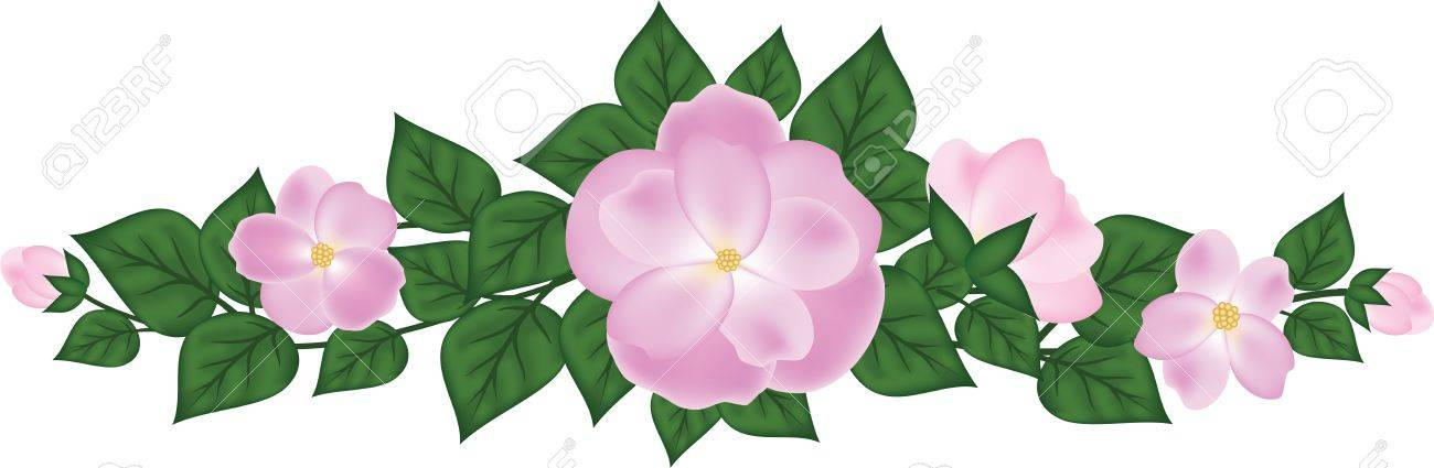 Horizontal branch of rose Stock Vector - 17746401