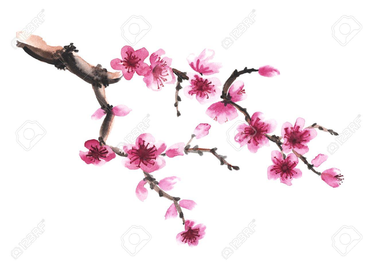 Aquarel Hand Getekende Tak Van Sakura Op Wit Wordt Geisoleerd