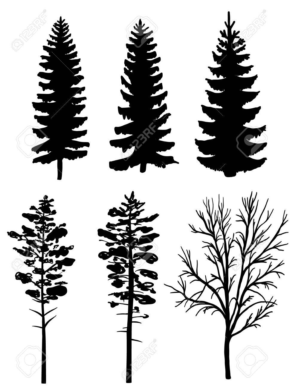 Set of black silhouettes of forest trees, fir and pine - 61634024