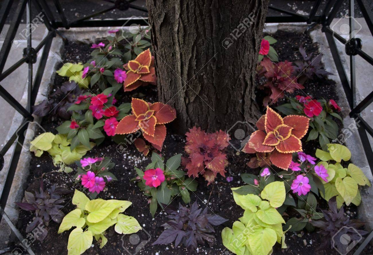 Flower Bed Around Tree In The Street Of New York City Stock Photo Picture And Royalty Free Image Image 19941034