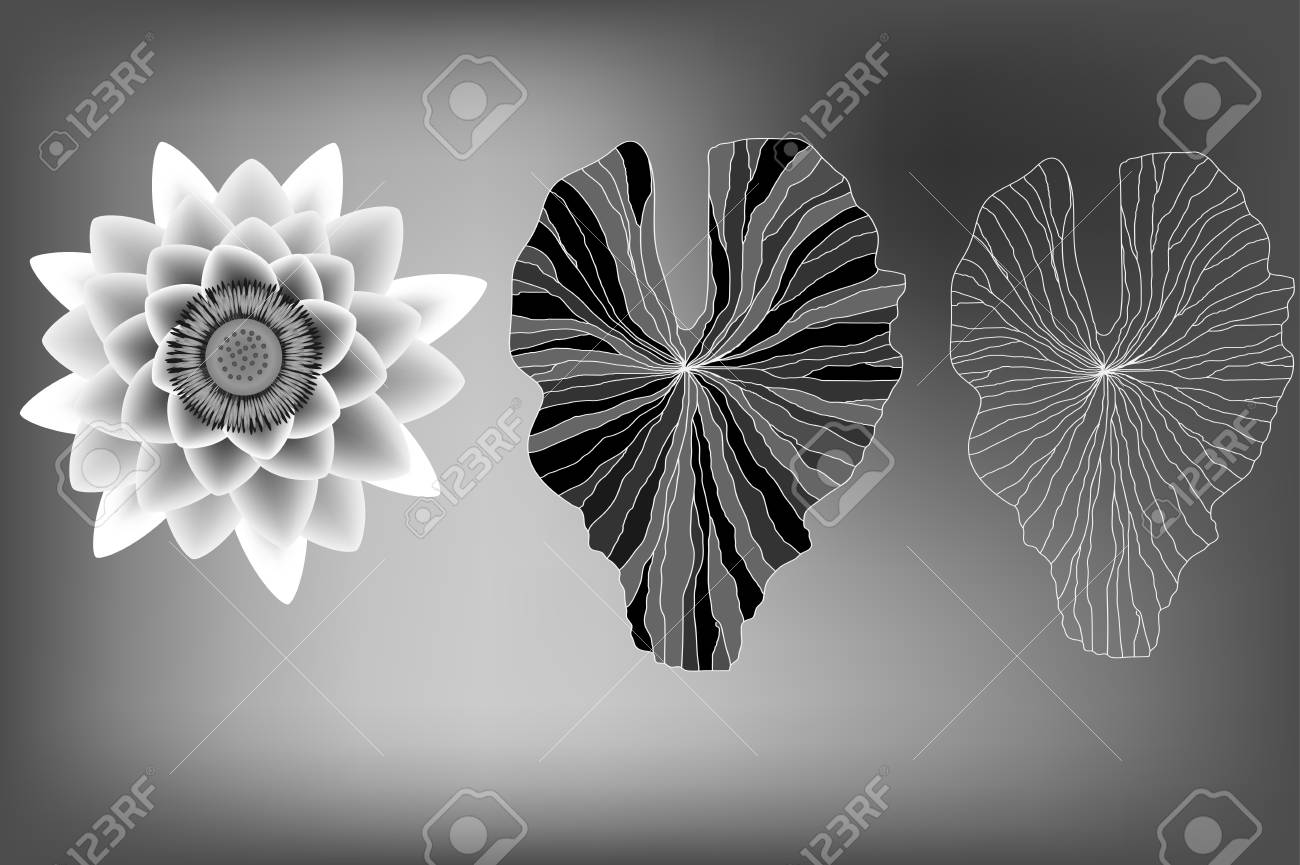 Lotus Flower And Leaves Elements Black And White Royalty Free