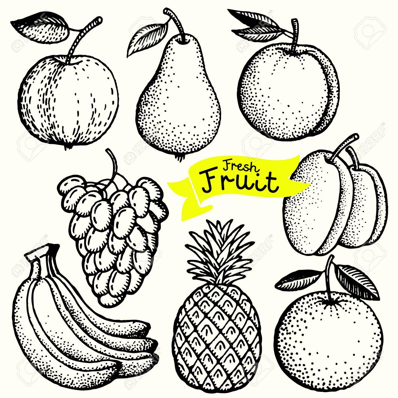 Dessin De Fruit ensemble de dessin fruits dans le style vintage main levée. clip art