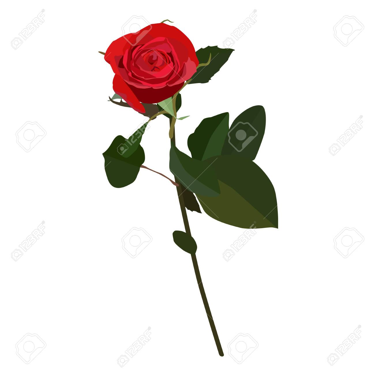 Blooming red rose, vector flat isolated illustration. Beautiful flower for greeting card, invitation, poster, banner. - 124100697