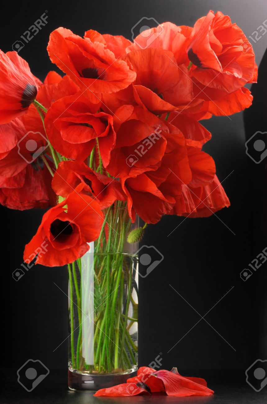 Well known Bouquet Of Poppies In Glass Vase On Black Background. Stock Photo  XN09