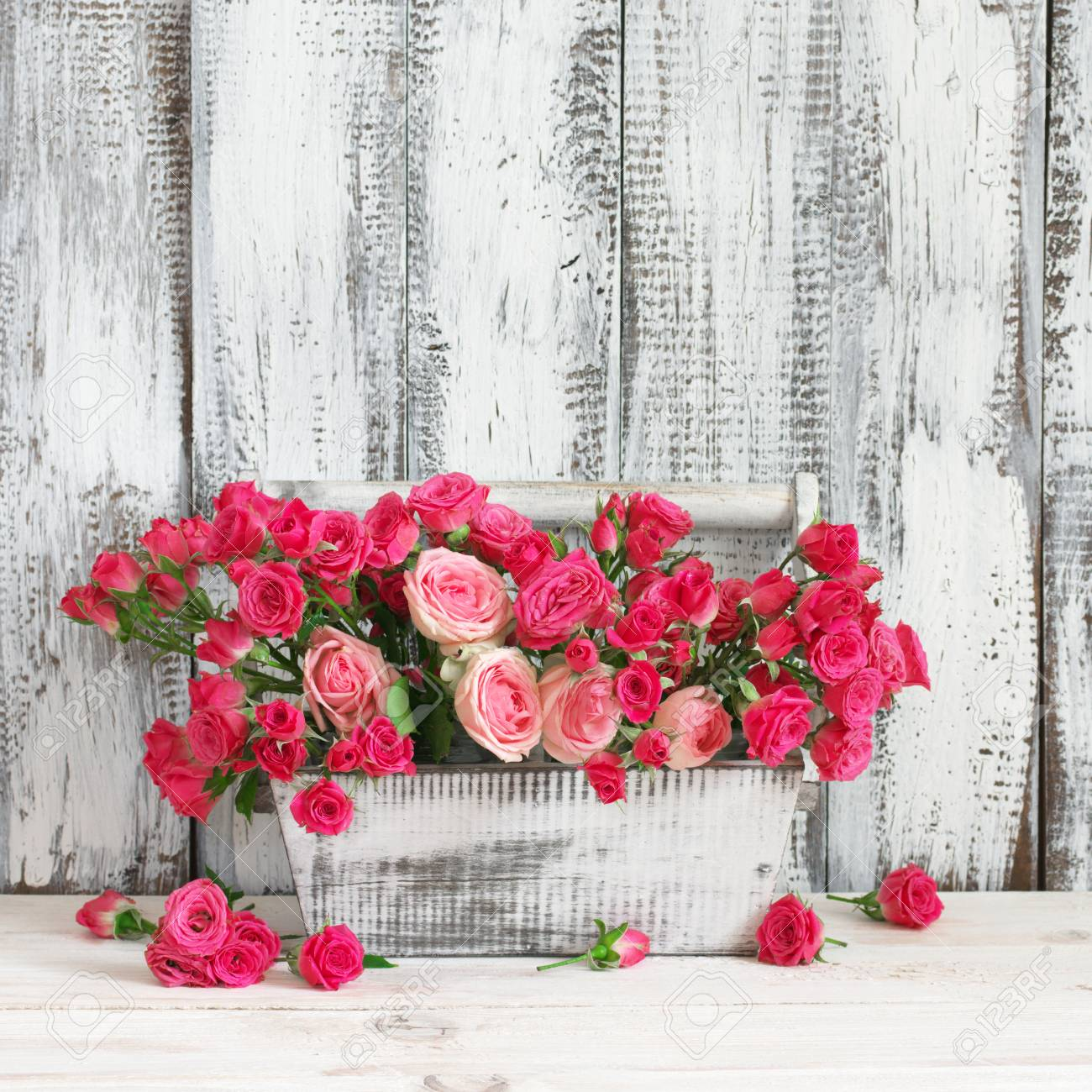 Bouquet of crimson and pink spray roses in wood box on white..