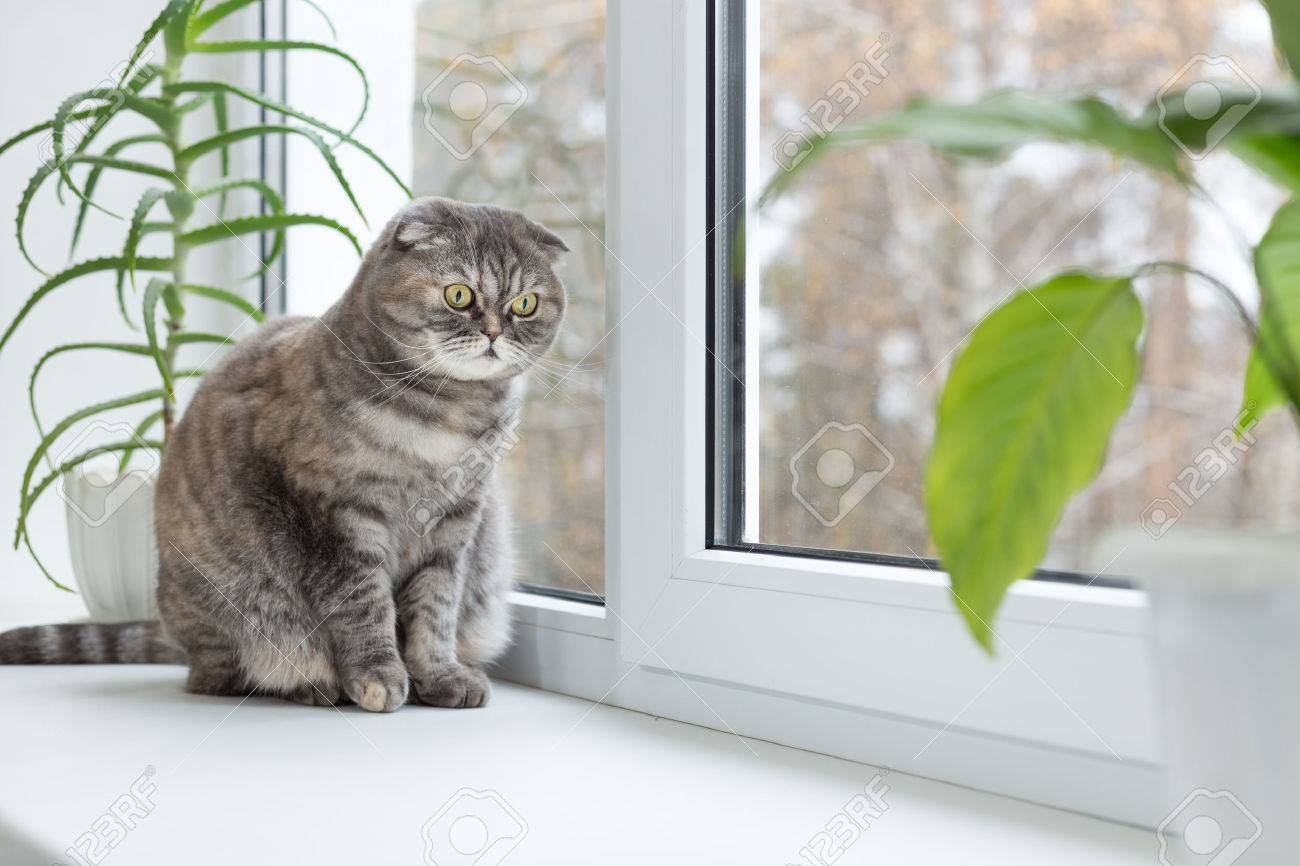 Cat Sits On The Windowsill And Looks Out The Window. Autumn Weather Outside.  Cat