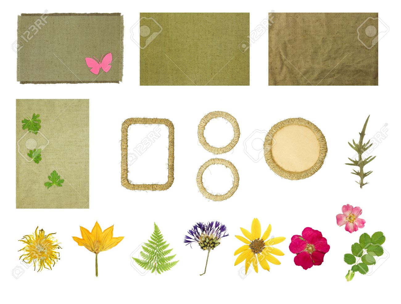 How to scrapbook pressed flowers - Set Elements For Scrapbooking Frames Braided Jute Thread Dried Pressed Flowers Objects Isolated