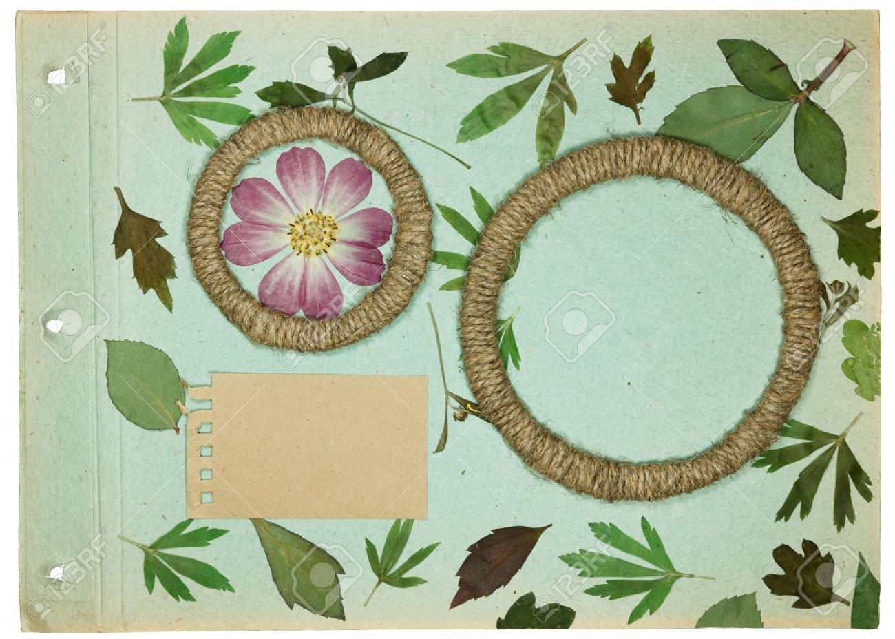 page rustic elements. Modren Elements Banque Du0027images  Page From An Old Photo Album Pistachio Color  Scrapbooking Element Decorated With Leaves Flowers And Petals Wild Flowers Rustic  Throughout Page Rustic Elements
