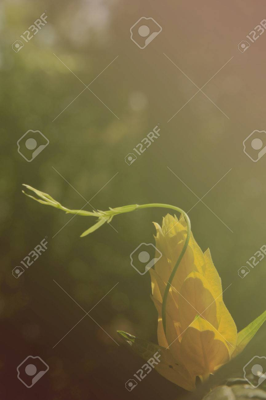 Exterieur Papier Peint Naturel Parc Vert Floral Tropical Le