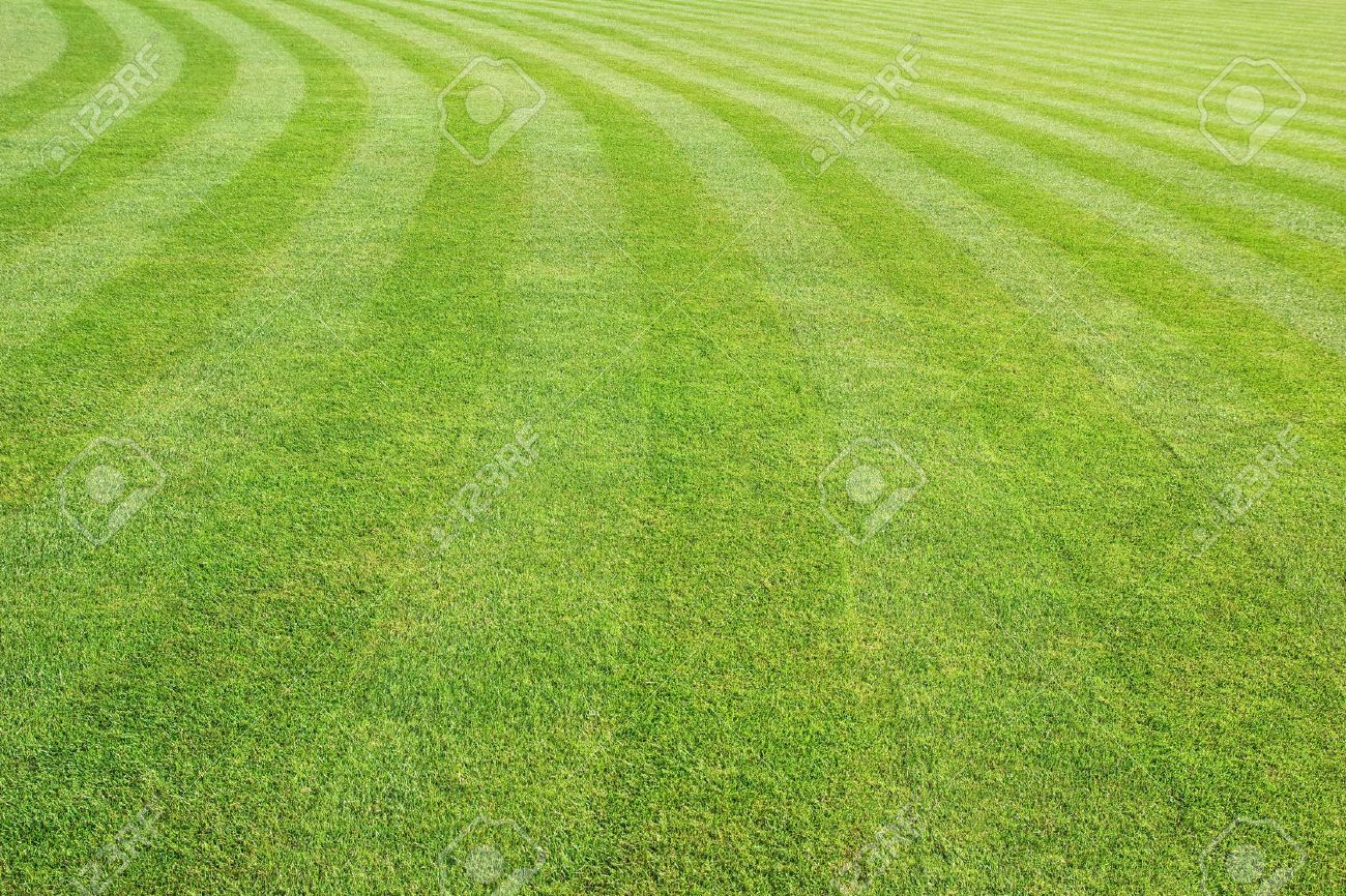 mowed lawn background - 41326830