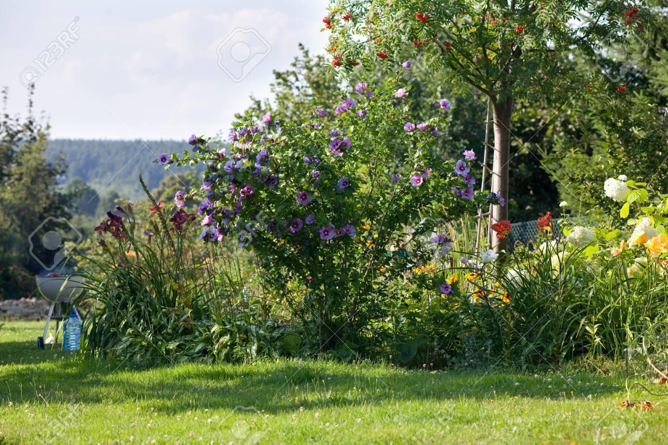 Summer Backyard Garden Landscape Blue Hibiscus Flowers Grill