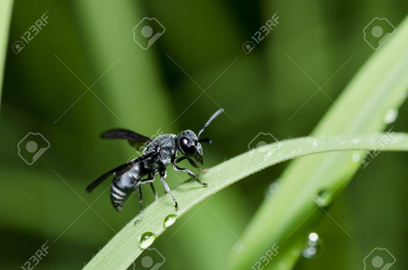Schwarze Wespe Bitte Speichern Sie Die Welt Schützen Die Natur