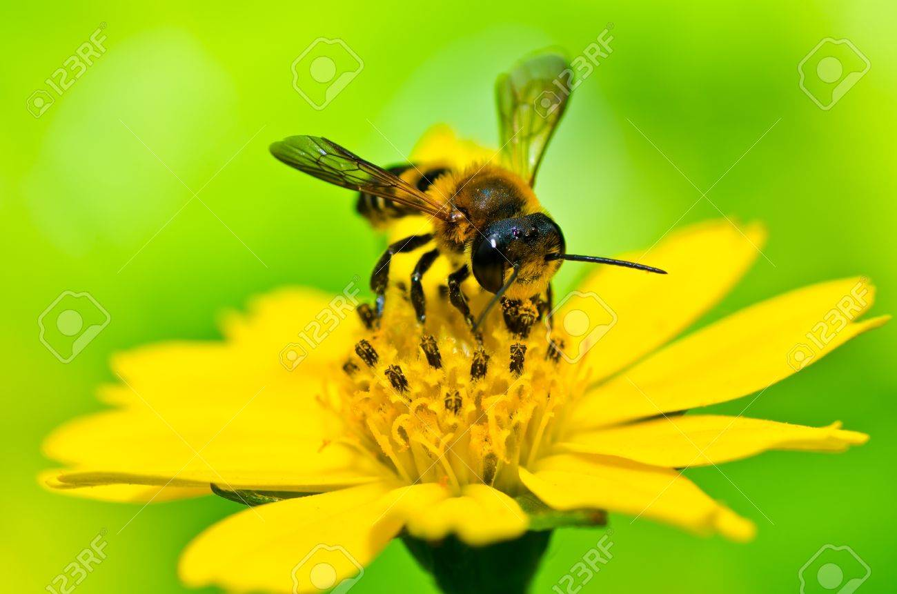 bee in green nature or in the garden Stock Photo - 10785848
