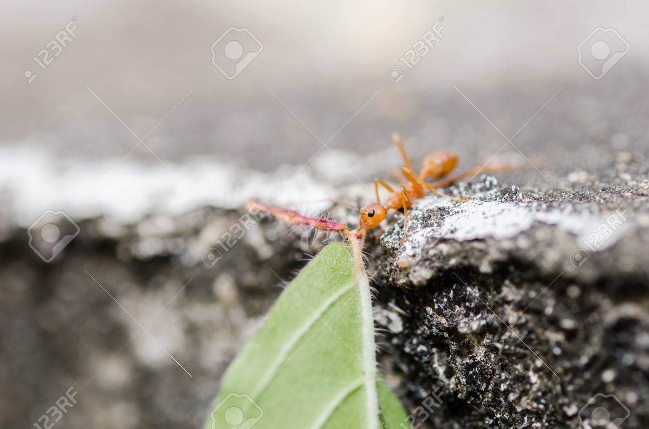 red ant power in the nature Stock Photo - 16310923
