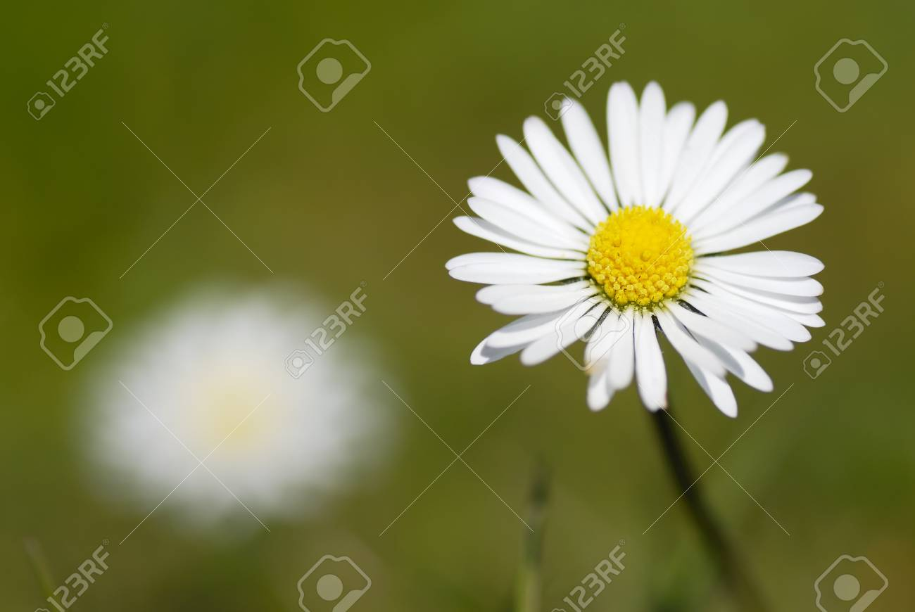 Natural background with copy space. Stock Photo - 13334255