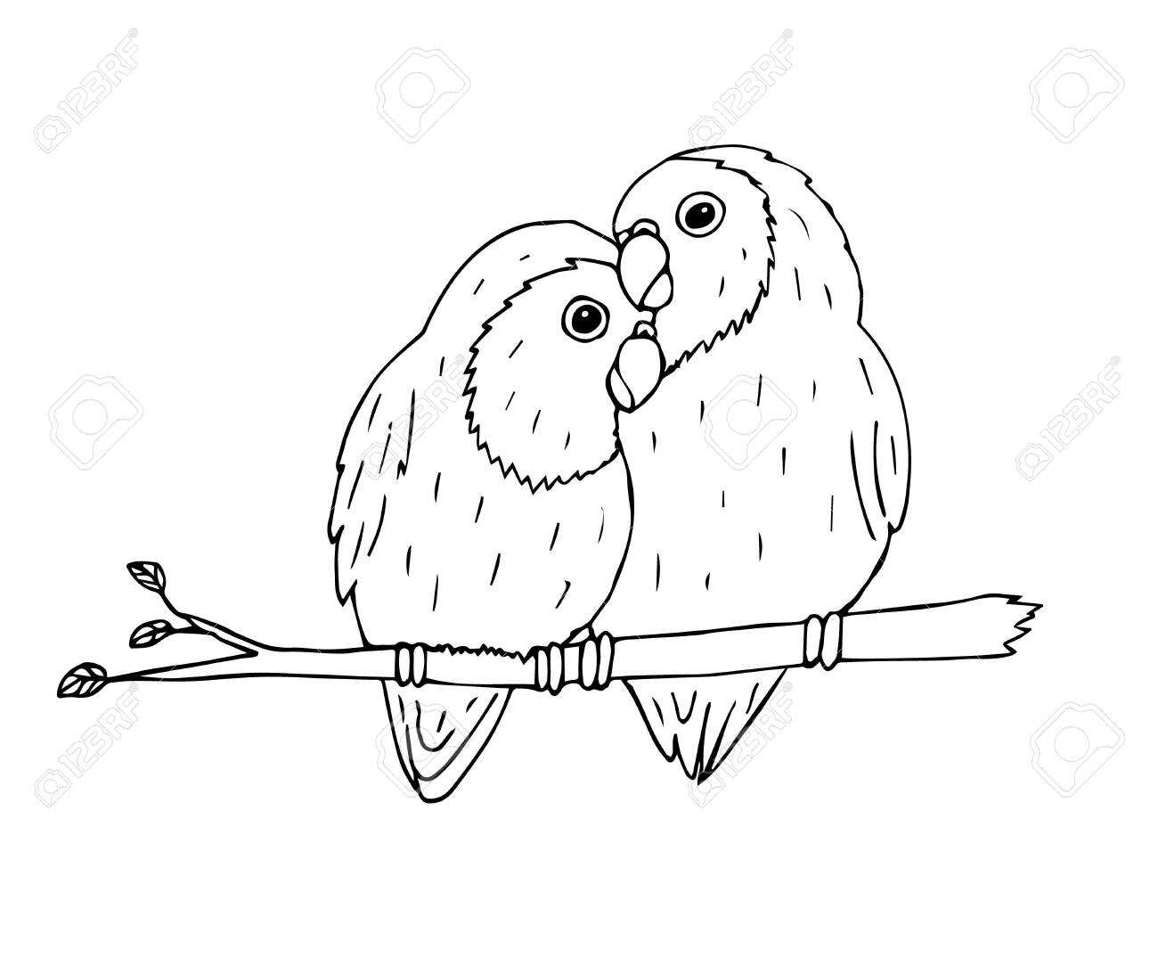 Hand Drawn Doodle Sketch Black Outline Lovebirds Parrots Pair Royalty Free Cliparts Vectors And Stock Illustration Image 142020590