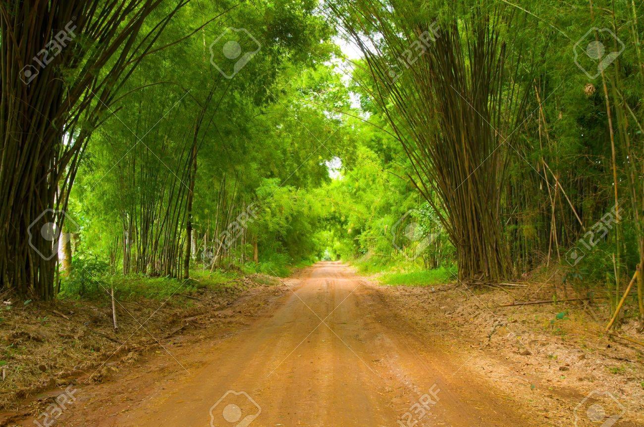 The walkway of bamboo Stock Photo - 13822825