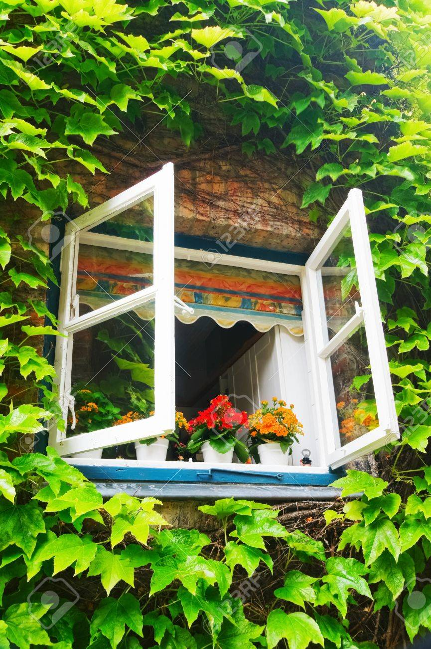 ivy around the open window in rural house - 9280446