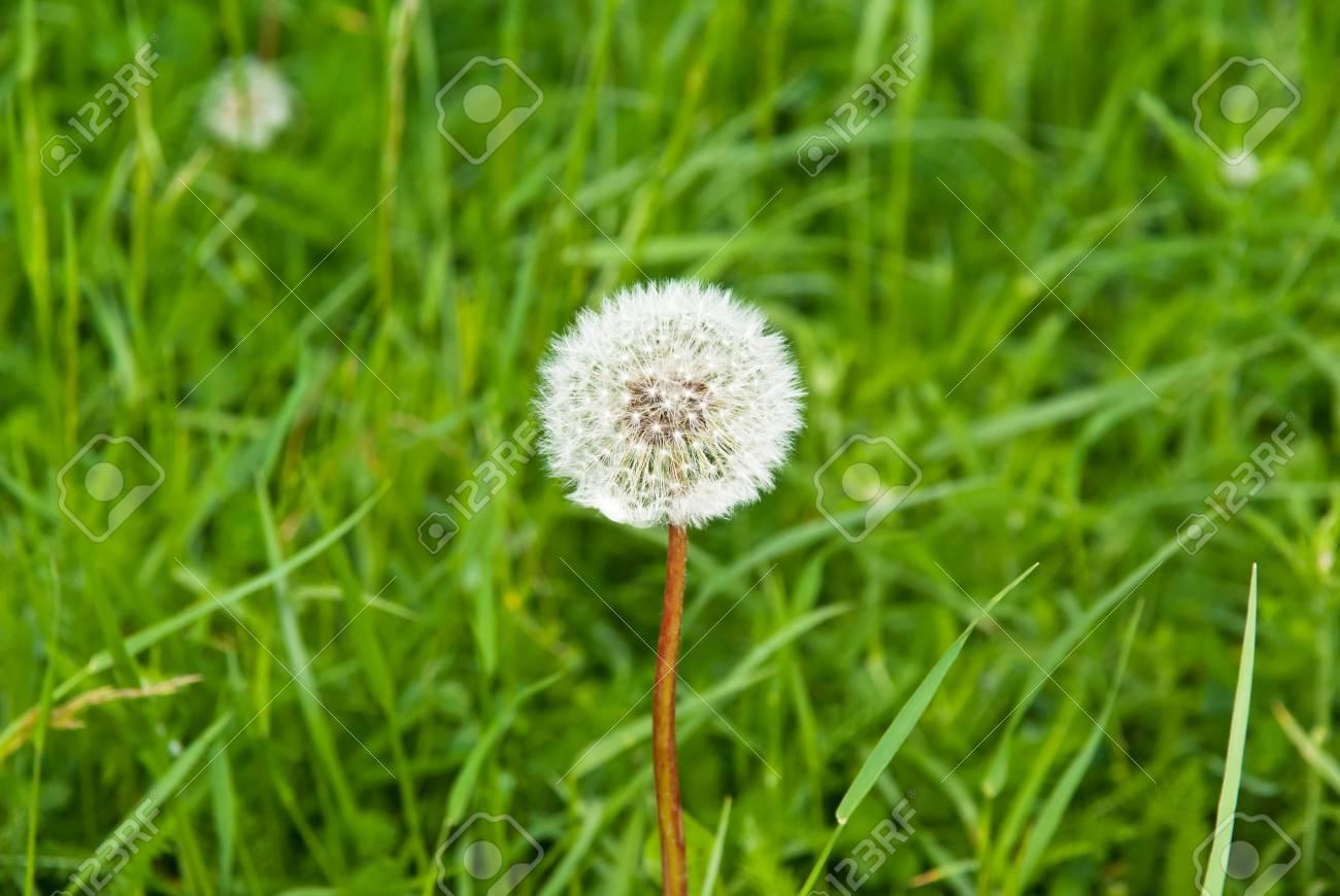 dandelion on the grass background - 9344573