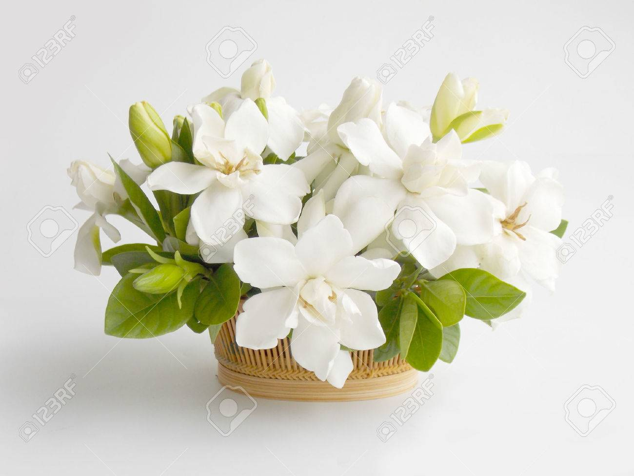 Beautiful White Gardenia Flower Stock Photo, Picture And Royalty ...