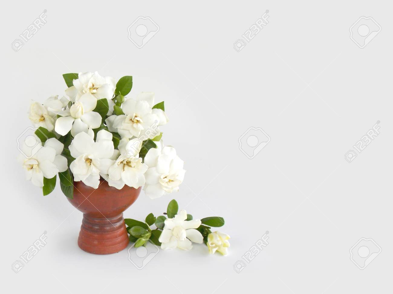 Beautiful White Gardenia Flower In Vase Stock Photo Picture And