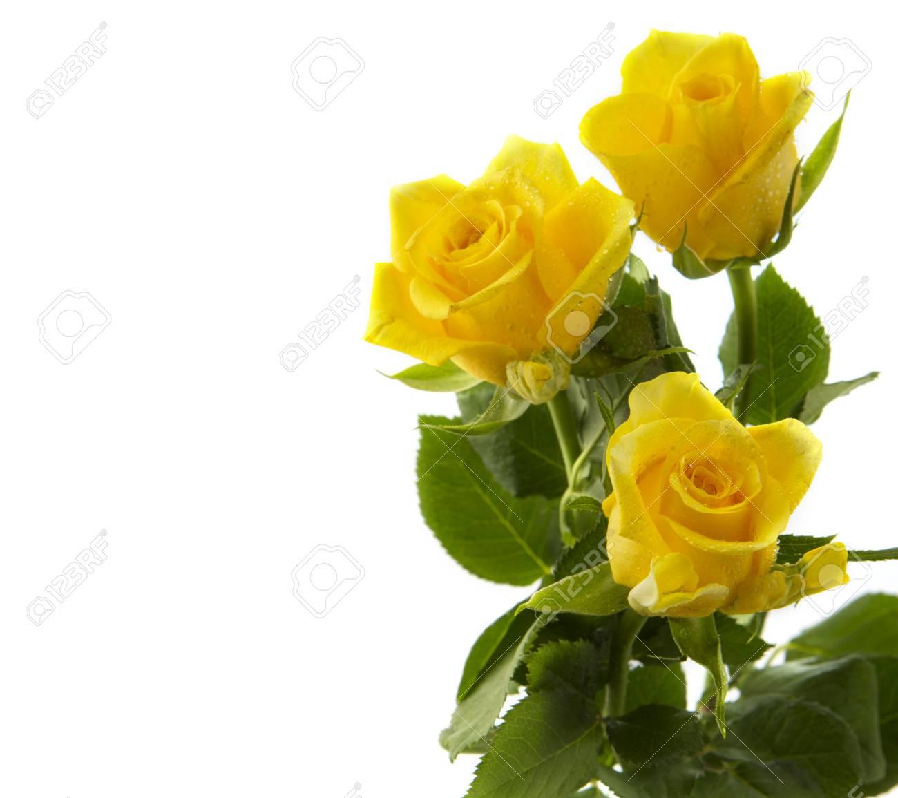 Bouquet De Roses Jaunes Isole Sur Fond Blanc Banque D Images Et
